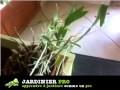 Comment bouturer une orchidée facilement