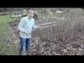 Comment tailler des framboisiers dans son jardin?