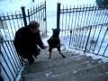 chien monte escalier debout
