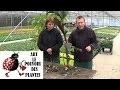 chaine de jardin:Comment arroser et faire l'Hivernage du canna plante annuelle