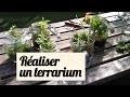 Faire un terrarium : nos astuces pour de belles boutures