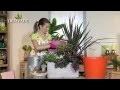 La plantation en jardinière - Jardinerie Truffaut TV