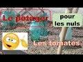 Le potager pour les nuls : les tomates