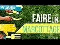 Comment faire un marcottage ?