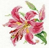Lot de 3 Kits point de croix débutant motif Fleurs Alisa