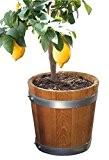 Nouveau fabriqué tonneau, banneau, bac à fleurs, jardinière, fût de chêne - en bois massif de chêne huilé (D50 H40 ...