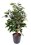Arbre artificiel, plante semi-naturelle Ficus Natasja 60cm