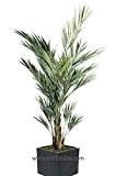 Artificielles - Palmier kentia artificiel en pot superbe de realisme h 180 cm vert - dimhaut: 180 cm - couleur: ...