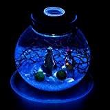 Bocal en Verre Bouteille Contenant Vide Transparent Lampe LED Bouchon de Liège