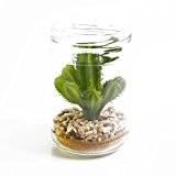 Cactus du Pérou artificiel dans un pot en verre, vert, 13 cm, Ø 8 cm - plante succulente artificielle / ...