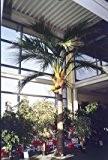 Cocotier artificiel, 1148 palmes, DELUXE, 480 cm - arbre artificiel - artplants
