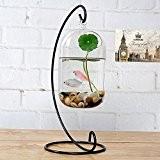 Décoratif à suspendre Air de terrarium Bocal à poissons en verre transparent avec support en métal