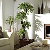Élégant Luxury artificielle japonaise Fruticosa Arbre, Grand Replica / Faux plantes d'intérieur - 5 pi 4 po / 165cm de ...