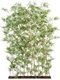 Generique - Bambou Artificiel Oriental Haie 180Cm - Vert