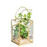 Géométrique Terrarium en verre LANTERNE de table Plante Fleurs à Suspendre