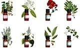Kit aromathérapie - Lot de 8 huiles essentielles : Laurier Noble, Lavande, Sauge Sclarée...