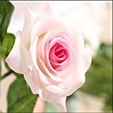 Kolylong Fleur Artificielle Bouquet Fleur De Rose Et Feuille Verte DéCoration PE Maison Mariage Accessoire (43 cm/ 17-10pc, Beige)