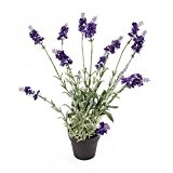Lavande artificielle en pot, violet foncé, 42 cm - lavande décoraative / plante artificielle - artplants
