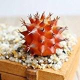LianLe Mini Plante Succulente Artificielle Cactus en Plastique pour Décoration,A