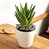 LKMNJ Ornements de fleurs artificielles fleurs d'émulation Accueil Mobilier le décor Plante Aloe Vera, vert