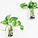 Lot de 2 mural terrariums en verre transparent à suspendre Fleur Vase carré Tube Air Pot Plante
