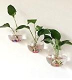 Lot de 3mur Terrarium en verre à suspendre Air Vase Plantes Décoration de mariage Petit + Moyen + Grand