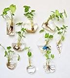 Lot de 9plantes mur Terrarium en verre à suspendre Air Vase siyaglass