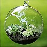Merssavo Pots à suspendre Vase en verre Transparente Décoration pour Terrarium