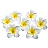 onecreation 4 cm Plumeria hawaïenne frangipanier en mousse flowers-wedding Décoration vacances Home dector DIY (100pcs-white Jaune Core)