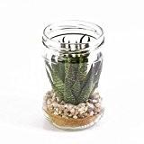 Plante succulente artificielle, Agave dans un grand pot en verre, vert foncé, 12 cm, Ø 8 cm - Cactee artificielle ...