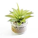 Plante succulente artificielle, Agave dans un pot en verre, 16 cm, Ø 13 cm - Cactee artificielle / Mini cactus ...