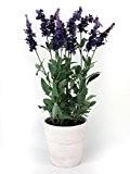 Pousse de lavande artificielle en pot, violet foncé, 48 cm - Plante artificielle / Lavande fleur de soie - artplants
