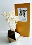 proudnature exotique Lot de 40mini Sola en Bois Fleur avec diffuseur de parfum pour la maison parfum jasmin de nuit ...