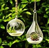 Siyaglass Lot de 2 vases en verre pour plantes en forme d'orbe et goutte