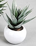 Tendance Décoration Cactus Fleurs Artificielles Fleurs Fleurs en plastique dans pot céramique blanc 12cm