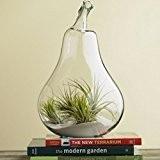 tia-ve forme de poire Vase Boule en verre à suspendre fleurs Transparent 4,5cm Bouche
