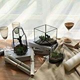 Vase Cube de Verre Décoration Transparent pour Maison Jardin Serre Carré Taille S