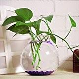 Vase de Fleur en Verre Transparent Mini Aquarium Conteneur Décoration