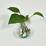 Vase en Verre Transparent Mural Forme de Boule pour Plante Fleur Décoration de Maison