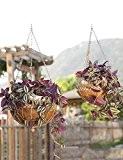 XUEWENZHE fleurs Etagère Pots de fleurs suspendus Étagères murales de jardin de jardin de style européen de jardin Fer, mur, ...
