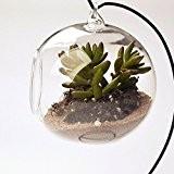 ZHOKE suspendus plante fleur Vase boule thé léger porte-bougie verre clair Dia.10cm