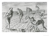 "Florida Indians Planting Maize, from ""Grandes Voyages"" 1591, Written and Engraved by Theodor De Bry - Jacques Le Moyne"