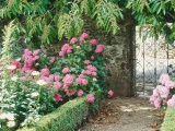 Pathway and Gate Low Clipped Box, Hydrangea - Jacqui Hurst