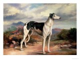 A Greyhound in a Hilly Landscape - James Beard