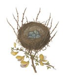 Antique Bird's Nest II - James Bolton