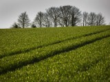 United Kingdom, Cotswald, North Leach, Field with Tractor Marks - James Braund