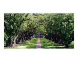 Oak Alley Plantation - Larry Powell
