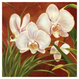 Red Orchid - Laurie Snow Hein