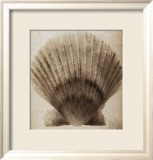 Scallop Shell - Mandolfo