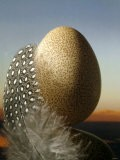 A Guinea Fowl Egg and Feather - Manfred Seelow